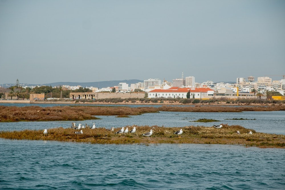 After renting a bike in Faro you can ride to Ria Formosa Natural Park